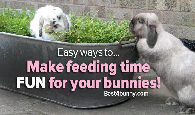 Best4bunny-fun-feeding-