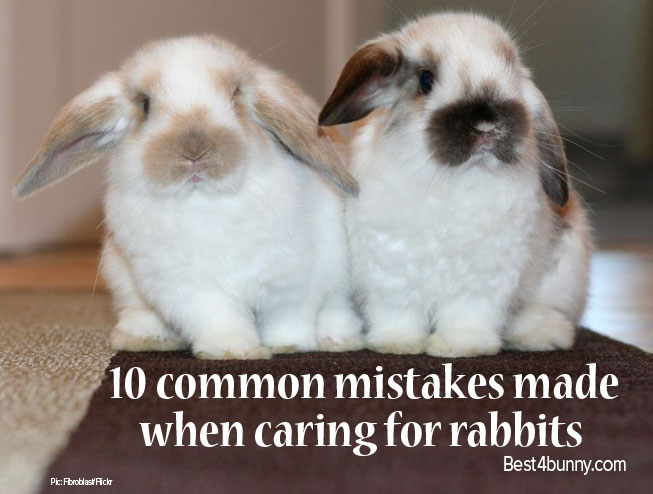 Best4bunny-care-mistakes