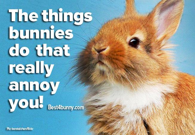 Bunny-annoyed-main