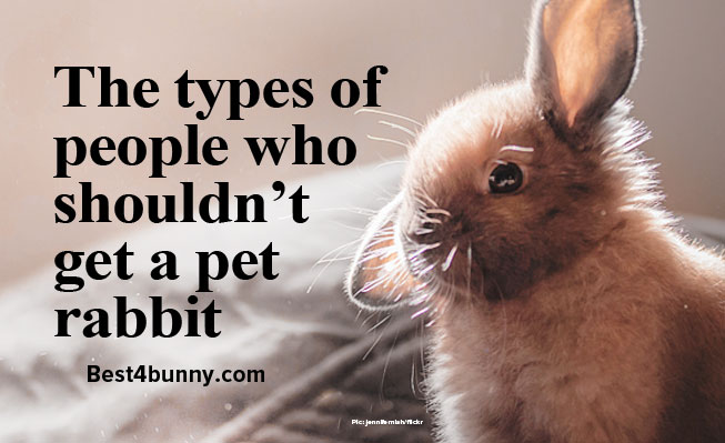 The Types Of People Who Shouldn T Get A Pet Rabbit Best 4 Bunny