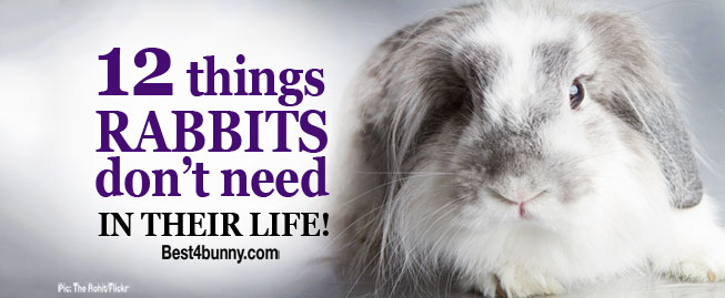 Best4bunny-12-things-rabbits-don't-need