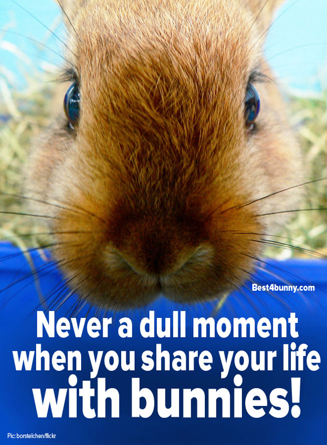 Best4bunny-dull-moment