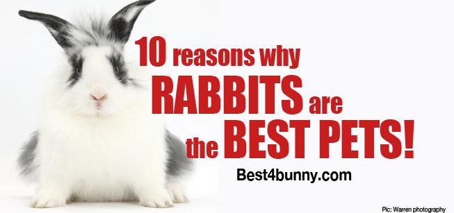 Best4bunny-rabbits-best-pets