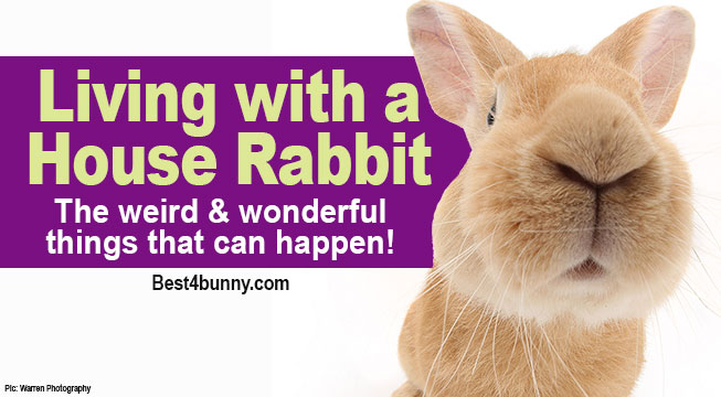 Best4bunny-Living-with-house-rabbit