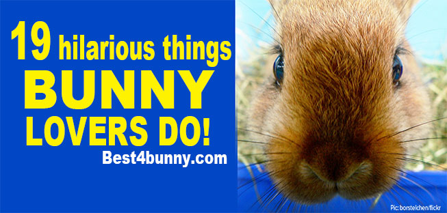 Best4bunny-hilarious-bunny-lovers