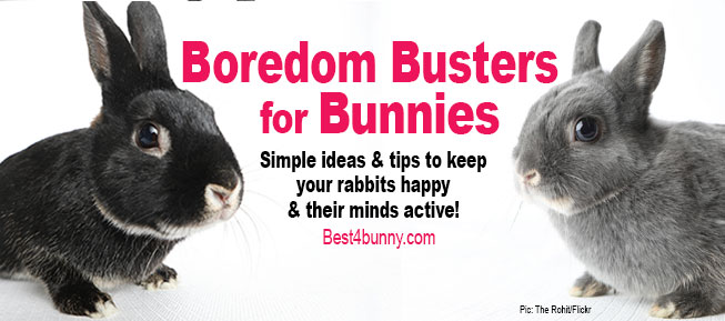Best4bunny-Boredom-busters