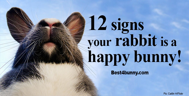 Best4bunny-how-to-tell-rabbit-happy