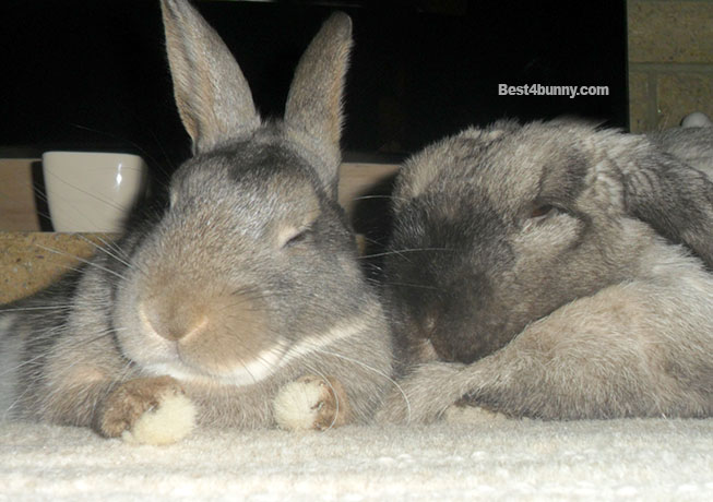 Best4bunny relaxed