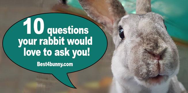 Best4bunny-questions-rabbit-asks