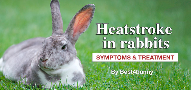 Best4bunny-heatstroke-in-rabbits
