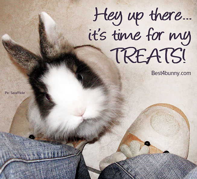Best4bunny-Treat-time