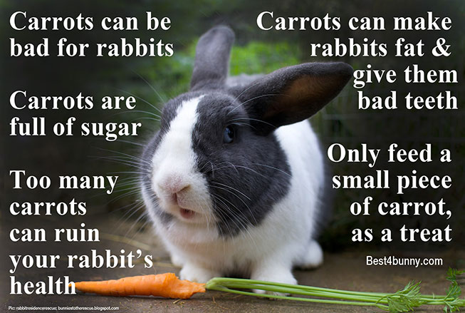 Best4bunny-carrots-and-rabbits