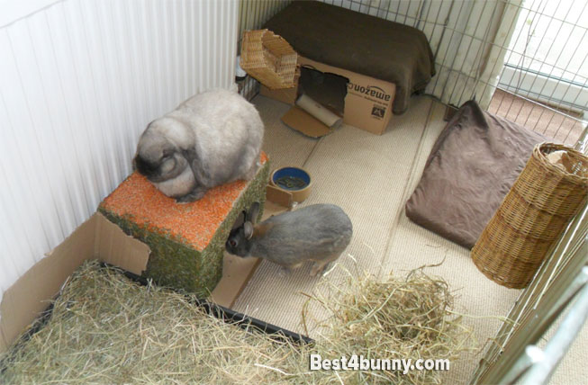 Rabbit indoor home