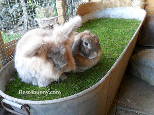Bunny home idea