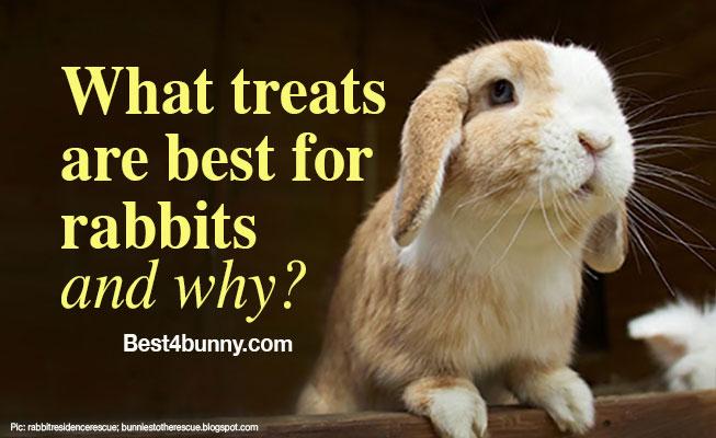 Best4bunny-rabbit-treats