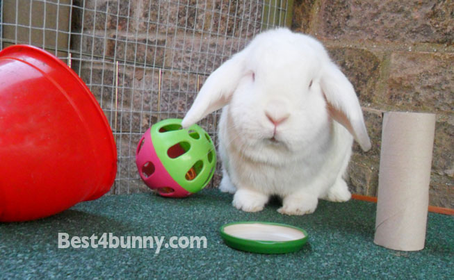 Bunny throw toys