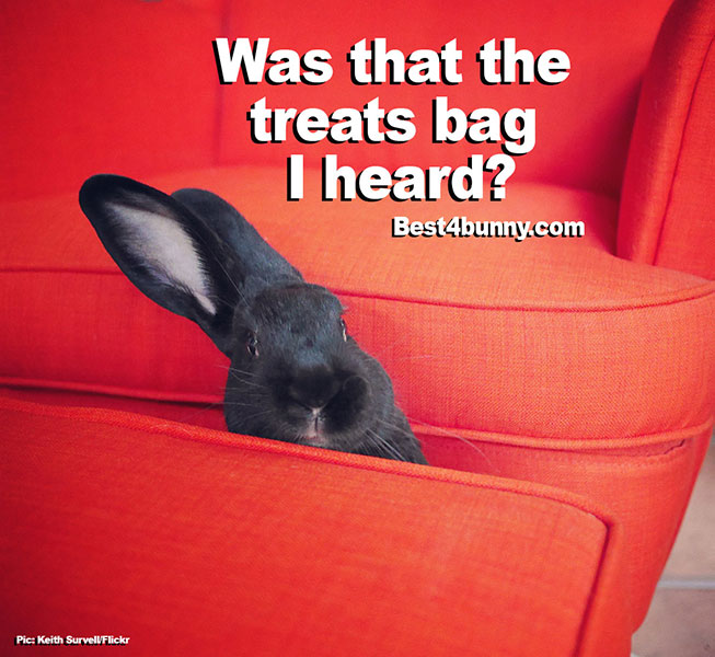 Best4bunny-treats-bag