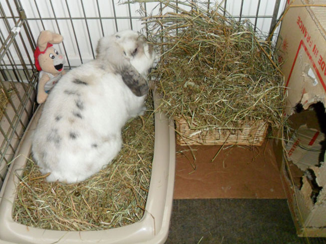 Bunny housing hay rack