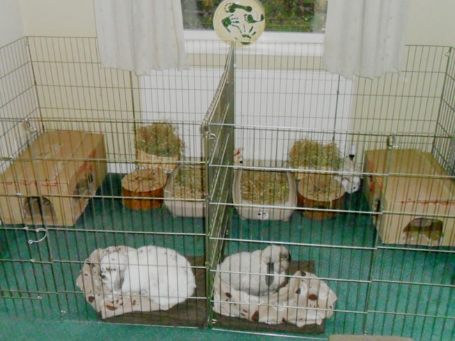 Rabbit home ideas indoor