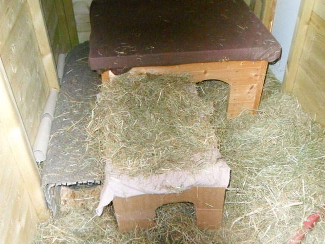 Bunny nest boxes